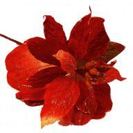 Glitter Velvet Poinsettia Pick