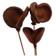 Badam Hearts ( 3 Stems Per Bunch ) - Natural