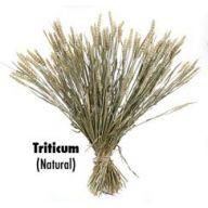 4 oz Triticum - Natural