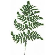 "17 "" Plastic Leatherleaf Fern ( Case only )"