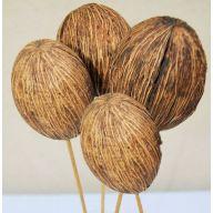 Mintolla Balls ( 4 stems per bunch )