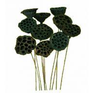 """4 """" Large Lotus Pods ( Pk 6 ) - Green"""