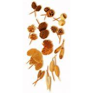 "6 "" Dried Assorted Pod Picks - Orange ( Packed 50 )"
