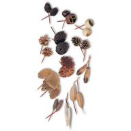 """6 """" Dried Assorted Pod Picks - Natural ( Packed 50 )"""