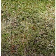 Sheet Moss Bulk - 5lbs - Green (7490.00.72)