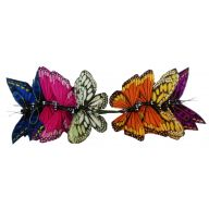 """4 """" Asst Feather Butterfly ( Bx 12 ) - Colored"""