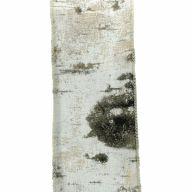 """2.5"""" X 10yd Wired Birch Branch Ribbon"""