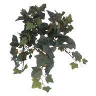 X8 Napa Ivy Hanging Bush