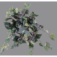 X 159 Pothos Ivy