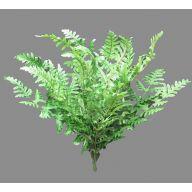 X 18 Pretty Fern - Green