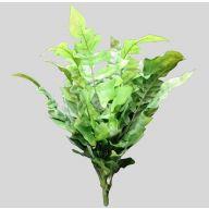 X 12 Wide Leaf Fern - TT Green