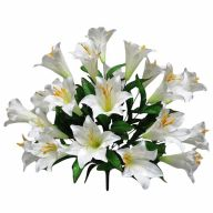X24 Easter Lily - White