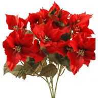X10 Natural Poinsettia