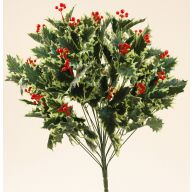 X24 VARIGATED HOLLY BUSH W/HARD RED BERRIES