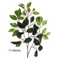 X42 Ficus Leaves pk / 6