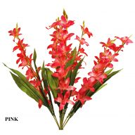 X10 Spike Orchid