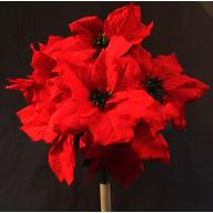 X 7 Poinsettia - Red