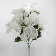X 7 Poinsettia White Snow Center