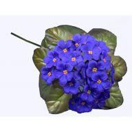 African Violet - Purple