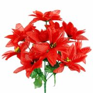X 12 Poinsettia Bush