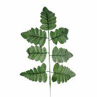 X7 Silk Leather Leaf (Sold By Bundle Of 12)