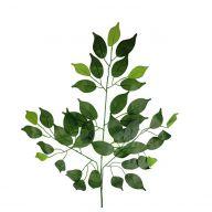 X42 Ficus Spray Pk / 12