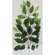 X42 Ficus Spray Pk / 12