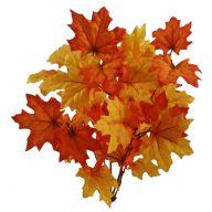 X 11 Maple Leaf