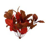 X 12 Magnolia Bush