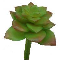 "4.75 x 3.5 "" Echeveria Lola Plant - Green / Burgundy"