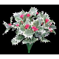 X 18 Holly - Variegated