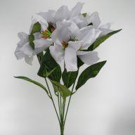 X7 Magnolia Bush