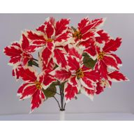 X12 M.P. Poinsettia Bush - Peppermint