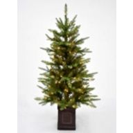 "4.5' Entrance Tree Columbus Fir 235 Tips, 120 Lights, Magnesia Container 28""Dia"