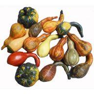Pumpkin / Gourd Assortment ( 15 per bag )