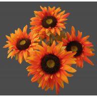 X 5 Sunflower