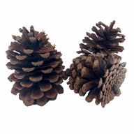 Mixed Pinecones (Sold By Pack Of 6)