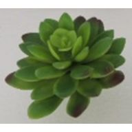Green / Cranberry Tip